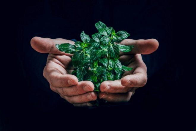 zrodla odnawialne